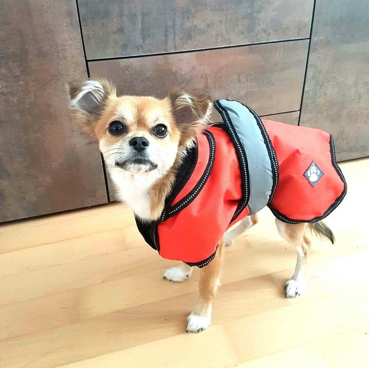 2-in-1 Hundemantel für kleine Hunde (XS)