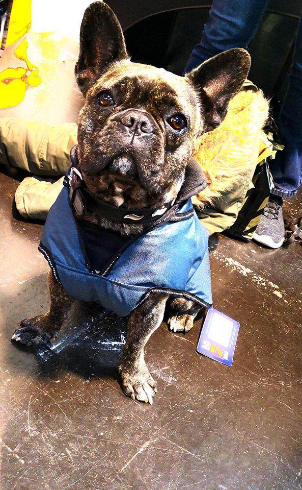 2-in-1 Hundemantel Französische Bulldogge
