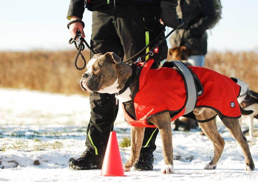Hundejacke 2-in-1 - Old English Bulldog