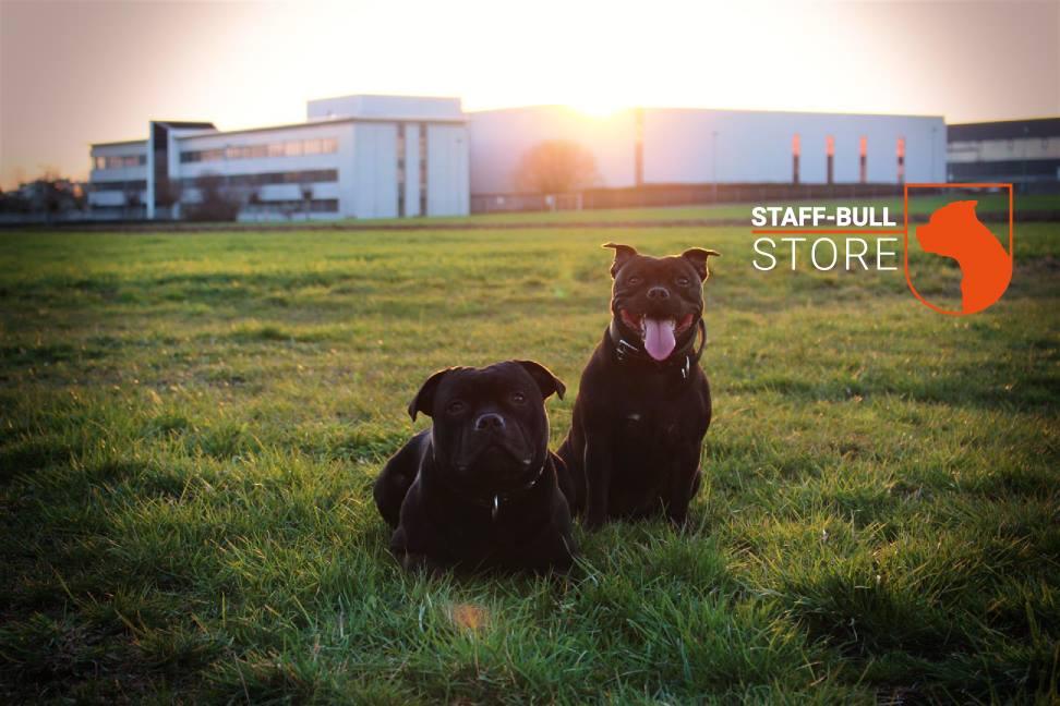 Staff-Bull Store Team